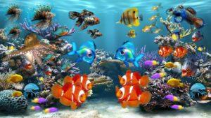 aquarium, fish, fish tank